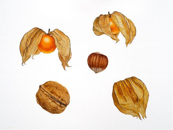 Physalis and nuts